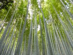 s3竹林のこみちP1030719